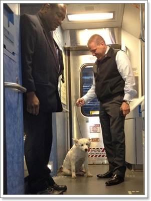 Dogilike.com :: สุดระทึก! เจ้าหน้าที่รถไฟหยุดรถฉุกเฉินช่วยชีวิตตูบหลงทาง