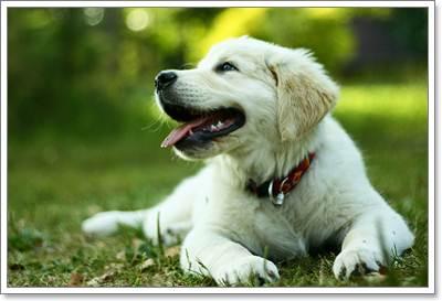 Dogilike.com :: จัดบ้านง่ายๆ คลายร้อนให้น้องหมา ...