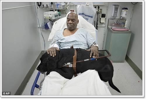 Dogilike.com :: หวุดหวิด! สุนัขนำทางช่วยชีวิตเจ้าของตาบอดตกรางรถไฟ