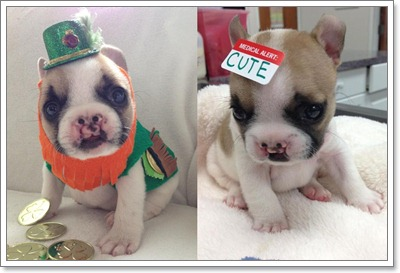 Dogilike.com :: ซึ้ง! ทุกฝ่ายระดมเงินช่วย ลูกสุนัขปากแหว่งเพดานโหว่