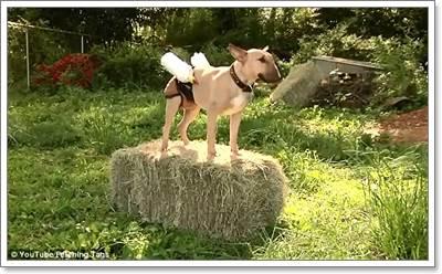 Dogilike.com :: คลิปน่ารัก! ตูบพี่เลี้ยงกับกางเกงป้อนนมลูกแพะ