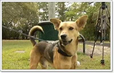 Dogilike.com :: ซึ้ง! ชายมะกันส่งสุนัขรักษาพร้อมรับเลี้ยง หลังพบถูกรถชนสาหัส