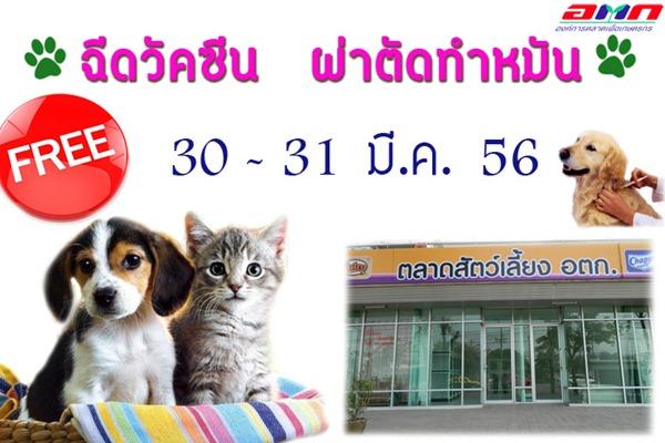Dogilike.com :: อ.ต.ก.จับมือกรมปศุสัตว์ ฉีดวัคซีน ทำหมันสุนัข แมว ฟรี!!