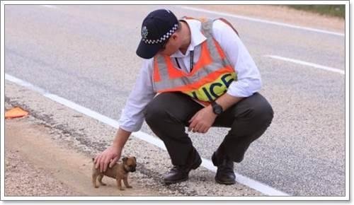 Dogilike.com :: ปาฏิหาริย์! ลูกสุนัขรอดชีวิตจากอุบัติเหตุรถคว่ำ