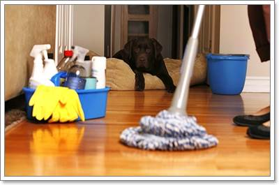 Dogilike.com :: เมื่อผู้สูงอายุคิดจะเลี้ยงสุนัข ต้องระวังสิ่งใดบ้าง ...
