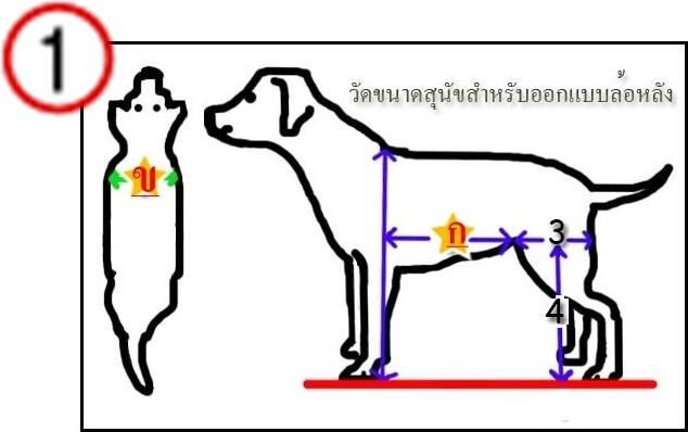 Dogilike.com :: แจกฟรี!! แบบและขั้นตอนการทำวีลแชร์สุนัขจาก ม.สุรนารี
