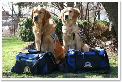 Dogilike.com :: 5 โกลเด้นฯ ช่วยคลายเครียดเหยื่อระเบิดบอสตันมาราธอน