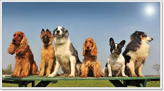 Dogilike.com :: เคล็ดลับการดูแลขนน้องหมาในหน้าร้อน!