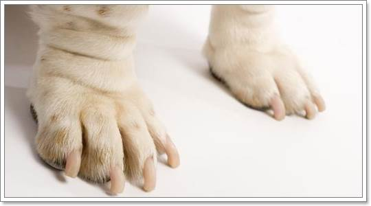 Dogilike.com :: จัดการคราบเหลืองตามตัวน้องหมาให้อยู่หมัด!!