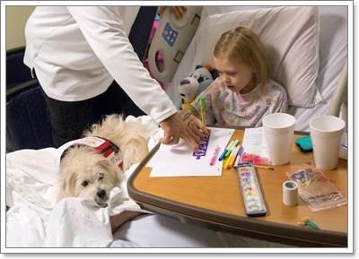 Dogilike.com :: กำลังใจ! สุนัขได้รับอนุญาตให้อยู่เป็นเพื่อนหนูน้อยในห้องผ่าตัด