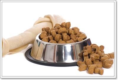 Dogilike.com :: 4 เคล็ดลับดูแลสุขภาพผิวหนังและขนของสุนัขไทยบางแก้ว
