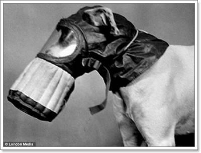 Dogilike.com :: ภาพหาดูยาก! สุนัขสงครามโลกใส่หน้ากากป้องกันแก๊สพิษ
