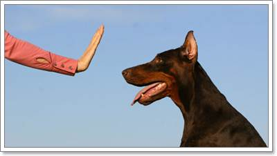 Dogilike.com :: 5 เทคนิคเลี้ยงน้องหมาให้อายุยืน ...