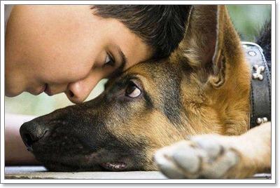 Dogilike.com :: รวมเทคนิคดูแลสุนัขแก่ให้มีอายุยืนยาว