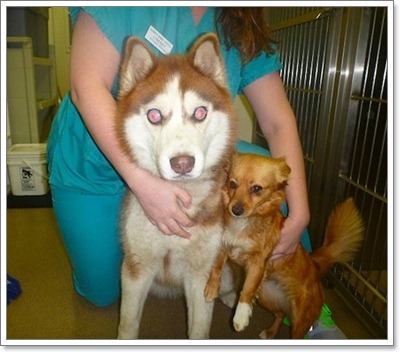 Dogilike.com :: สองซี้ถูกทิ้ง! สุนัขตาบอดพร้อมเพื่อนนำทางเร่งหาบ้านใหม่