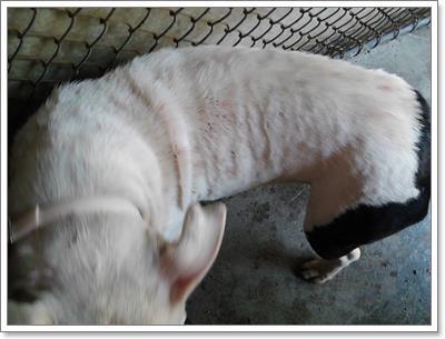 Dogilike.com :: ขนลุก! พบสุนัขหลงทางถูกกองทัพเห็บกัดทั่วตัวในสหรัฐ
