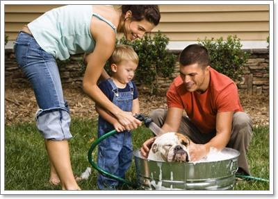 Dogilike.com :: 6 เทคนิคเปลี่ยนความเข้าใจในการเลี้ยงหมาของคนในบ้าน