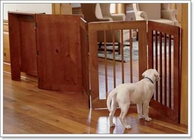 Dogilike.com :: อยู่กับสุนัขอย่างไร เมื่อตัวเราเป็นภูมิแพ้?