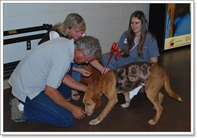 Dogilike.com :: ช็อค! พบสุนัขถูกทารุณตีตราตัวเลข 300 บนลำตัว