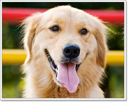 Dogilike.com :: Review : มามะ ... พาน้องหมาไปบริจาคเลือดกัน