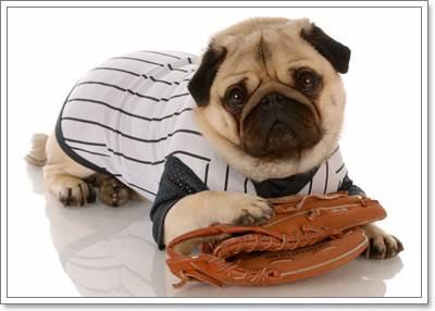 Dogilike.com :: พิชิตโรคอ้วนของหมาปั๊กง่าย ๆ ด้วยโภชนาการอาหารที่เหมาะสม