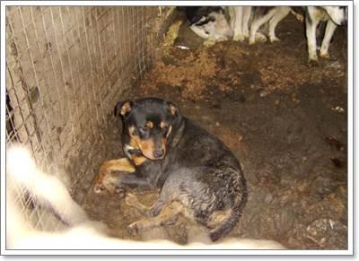 Dogilike.com :: ฉาว! จนท.ศูนย์พักพิงสัตว์ถูกตั้งข้อหาละเลยการดูแลสัตว์