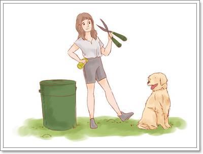 Dogilike.com :: เห็บ!! ศัตรูตัวร้ายของน้องหมาที่ต้องกำจัด