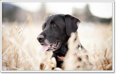 Dogilike.com :: รวมฮิตอุปกรณ์ที่ต้องใช้ในการดูแลขนน้องหมา