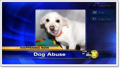 Dogilike.com :: ช็อค! พบสุนัขถูกทิ้งให้อดอาหาร ตาย 3 รอด 1