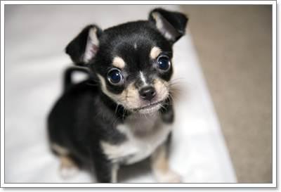 Dogilike.com :: ขนน้องหมากับปัญหาที่ไม่ควรมองข้าม...