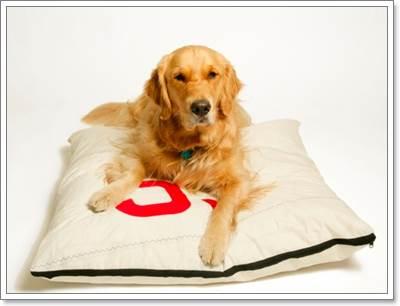 Dogilike.com :: น้องหมาพันธุ์ใหญ่กับค่าใช้จ่ายในการเลี้ยงดู
