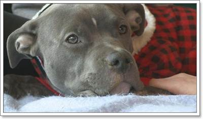 Dogilike.com :: ซึ้งน้ำใจ! เจ้าของร้านขนมทำคัพเค้กขาย นำเงินช่วยสุนัขถูกทำร้าย