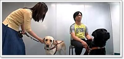 Dogilike.com :: 2 สุนัขนำทาง เปลี่ยนชีวิต 2 ผู้บกพร่องทางสายตา