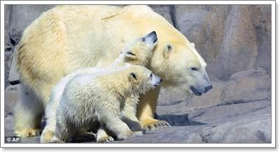 Dogilike.com :: น่าทึ่ง! สหรัฐฯ ฝึกบีเกิ้ลดมกลิ่นตรวจหมีขั้วโลกตั้งครรภ์