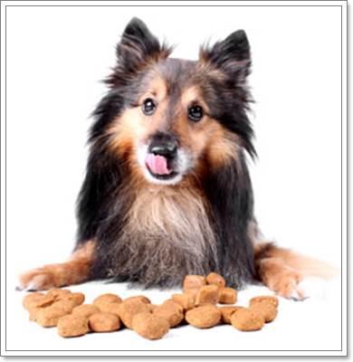 Dogilike.com :: วิธีเปลี่ยนอาหารง่ายๆ ให้น้องหมาขี้เบื่อ
