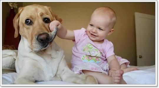 Dogilike.com :: วิธีเลี้ยงสุนัขให้เหมาะกับเด็กแต่ละช่วงวัย