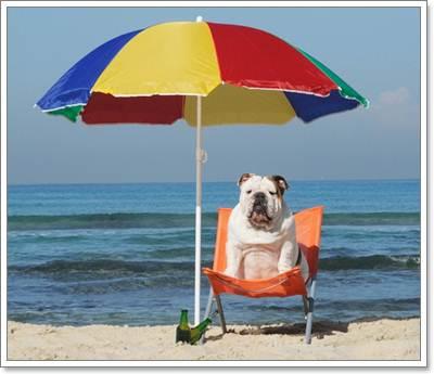 Dogilike.com :: ข้อควรระวังในการคลายร้อนให้น้องหมา ...