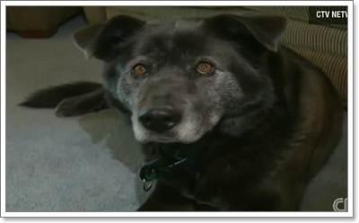 Dogilike.com :: สุดยอดฮีโร! สุนัขช่วยเด็กพลัดตกธารน้ำแข็งในแคนาดา