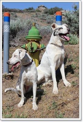 Dogilike.com :: มิตรภาพ! 2 ตูบหูหนวกตาบอด คู่ซี้ในศูนย์พักพิง