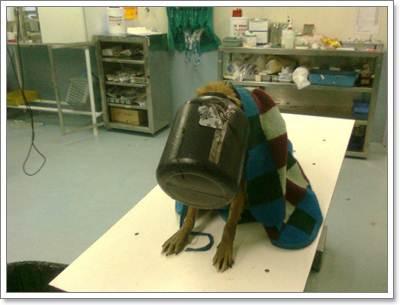 Dogilike.com :: รอดตาย! จนท.ช่วยชีวิตสุนัขหัวติดขวดลอยคอกลางทะเลสาบ