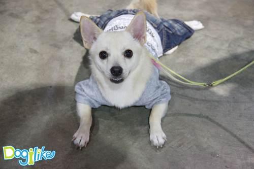 Dogilike.com :: พาทัวร์งาน Thailand International Dog Show 2013 # 2