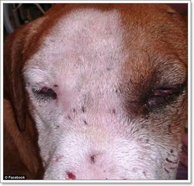 Dogilike.com :: ช็อค! สุนัขถูกยิงหน้า ยัดทิ้งถุงขยะในสหรัฐฯ
