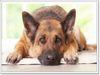 Dogilike.com :: รวมภาพน้องหมาในวันที่เเหงาๆ