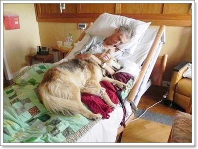 Dogilike.com :: รวมภาพน้องหมากับผู้ป่วยสุดประทับใจ