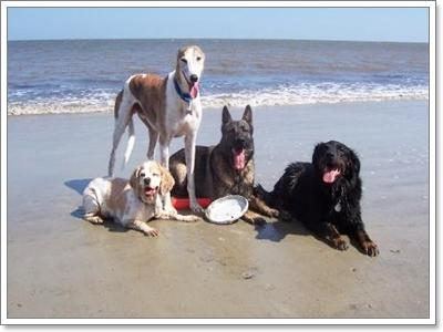 Dogilike.com :: Dog on the Beach