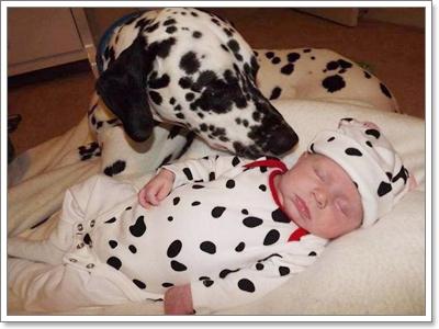 Dogilike.com :: พี่เลี้ยงจำเป็น ^_^