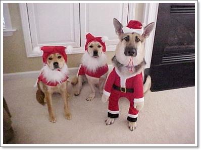 Dogilike.com :: น้องหมากับชุดประเพณีและเทศกาลสำคัญต่างๆ