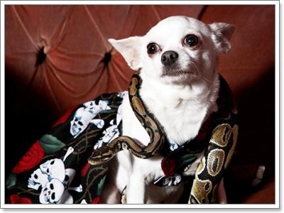 Dogilike.com :: น้องหมากับเพื่อนต่างสายพันธุ์สุดน่ารัก