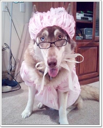Dogilike.com :: น้องหมาไซส์บิ๊กขอแบ๊ว