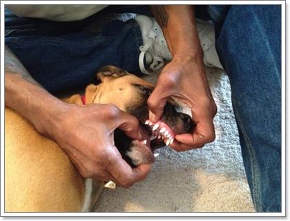 Dogilike.com :: กู้ชีพน้องหมาด้วยมือเปล่า